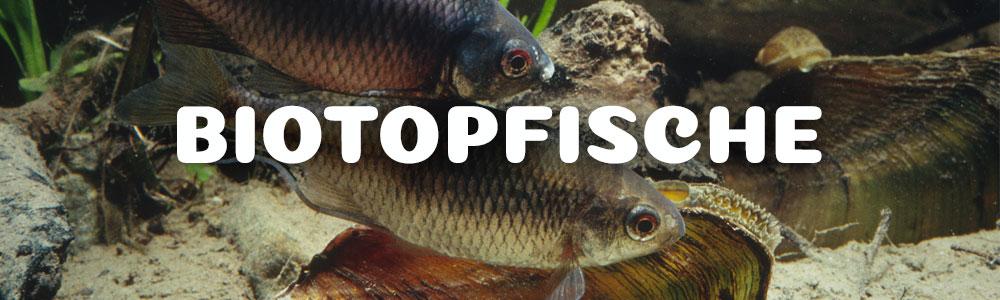 Altstädter Fischteich - Biotopfische