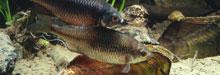 Biotopfische